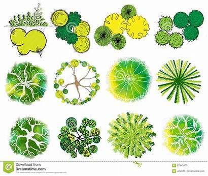 Arbre Copa Symbolen Symbols Arvore Treetop Cima