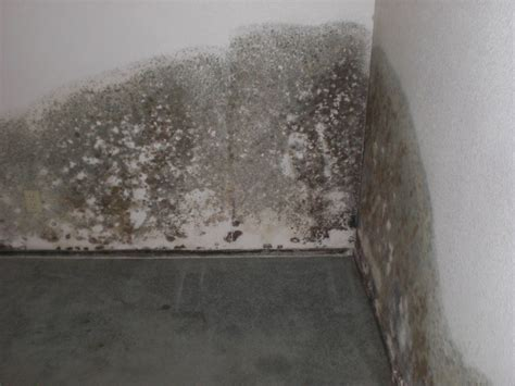 Kill Mold In Basement Mold In Home Ideaforgestudios
