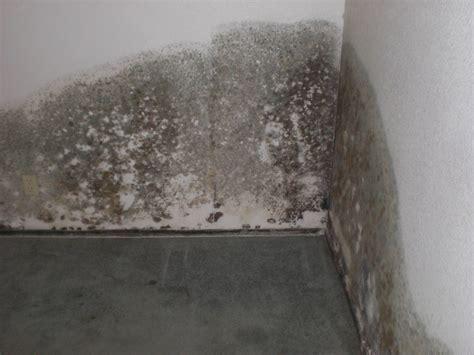 Black Mold Concrete Basement Walls Home Desain 2018