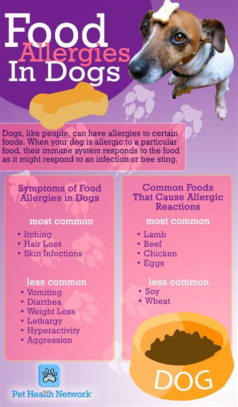 natural dog food ideas  pinterest natural