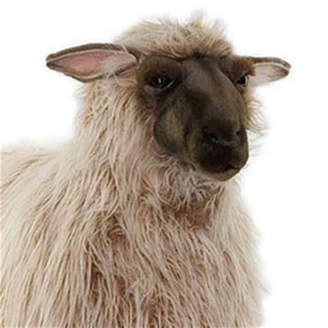 life size hansa sheep