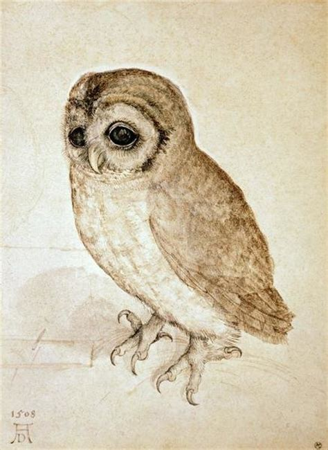 albrecht durer screech owl art print global gallery