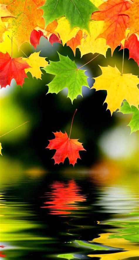 beautiful fall leaves god s creations s5 wallpaper