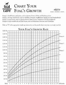 Foal Growth Rates