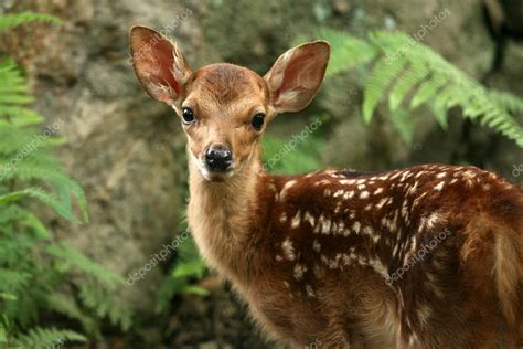 baby hirsch japan stockfoto  imagex