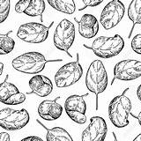 Spinach Drawing Drawn Leaves Vector Getdrawings sketch template