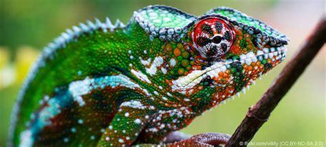 regenwald tiere chamaeleons abenteuer regenwald