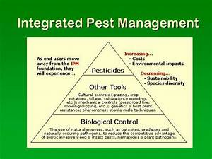 PPT - Protecting Food Resources: Pest Management ...