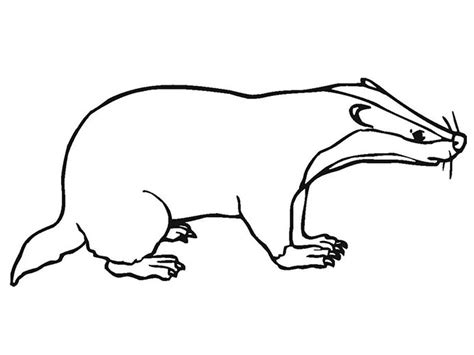 Badger Outline Printable Kids Coloring Pages http://www
