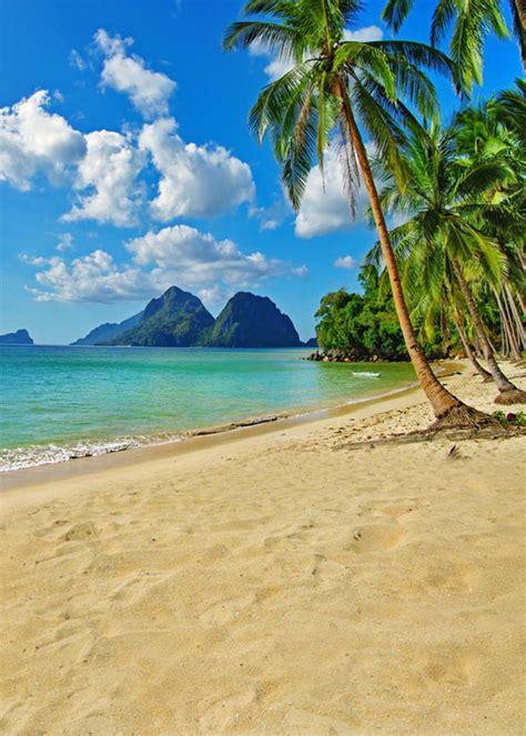 sea beach palm trees photography backdrops vinyl backdrops