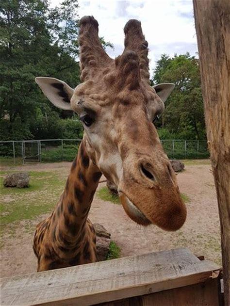 Neunkircher Zoologischer Garten Neunkirchen