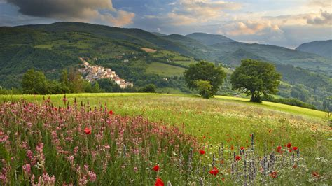 wildflowers   hillside hd wallpaper