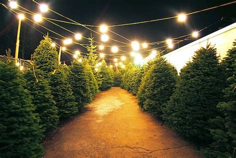christmas tree lot near me how to a tree bob vila radio bob vila