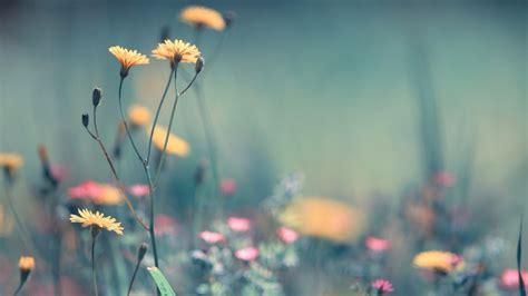 May Flowers Wallpaper Hd Desktop Wallpapersafari