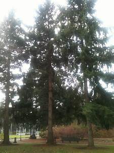 Salem  Oregon Moon Tree