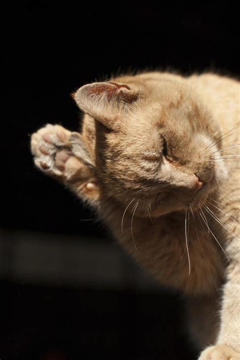 shaking head symptoms  cats cuteness