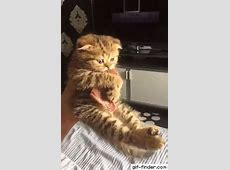 Aggressive kitten Cute animals Pinterest Food, Cat
