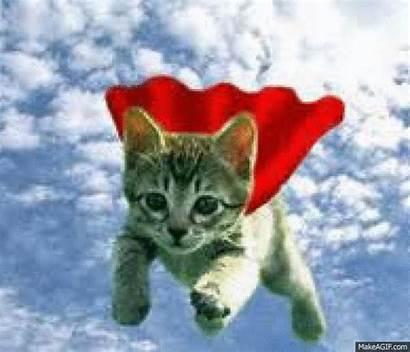 Supercat Makeagif
