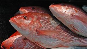 Red Snapper Season is Here on Alabama's Gulf Coast