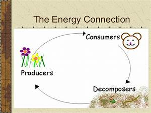 Obj 1 U00262 Compare Ways Plants And Animals Use Energy And How They Are D U2026