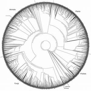 Jf Ptak Science Books  Representation Of Quantitative Data