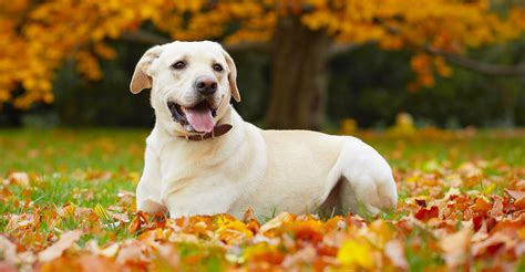 neosporin  dogs  dos  donts  treating  pet