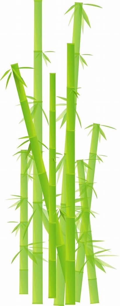 Bamboo Clipart Transparent Background Clip Sticks Border