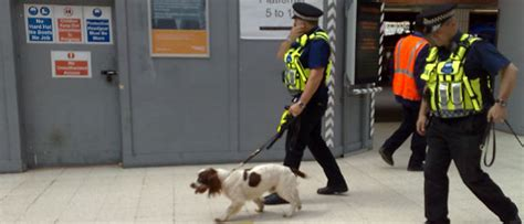 Uk Festivals Sniffer  Ee  Dogs Ee   Their Regulations Your Rights Talkingdrugs