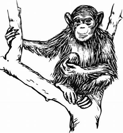 Outline Clipart Monkeys Transparent Chimpanzee Grayscale Monkey