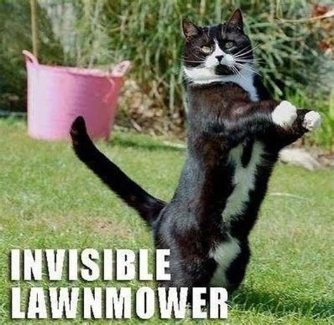 Invisible Cat Memes - invisible lawnmower daily picks and flicks