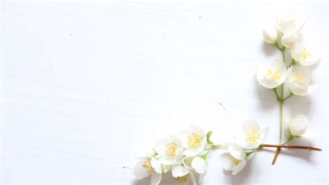 flowers frame  white wooden stock footage video