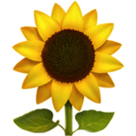 sunflower emoji ufb