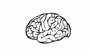 Free Brain Clipart Vector Transparent Pictures On Cliparts