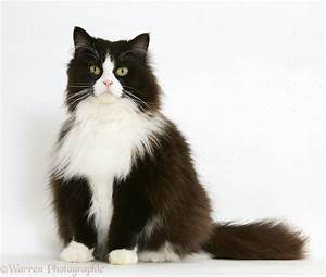 Image result for black and white cat | Miscellaneous ...