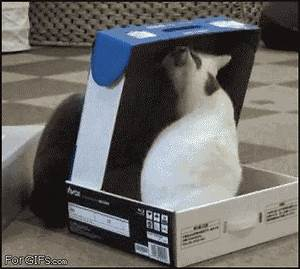 Astronaut Cat Gifs Funny - Pics about space
