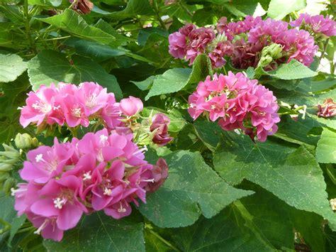 what s blooming sanibel moorings