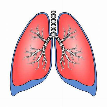 Lungs Phone Case Polmoni Exclusive Limited Edition