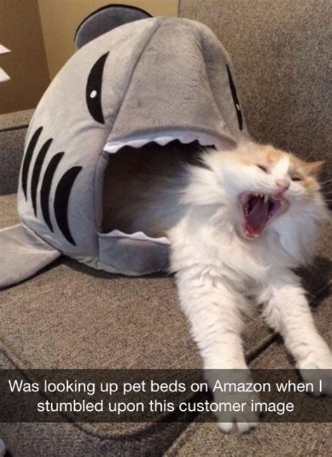 25 Best Ideas About Funny Cats On Pinterest Funny