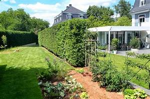 Bonsai Garten Hamburg : prunus lusitanica angustifolia heckenelemente f r ~ Lizthompson.info Haus und Dekorationen