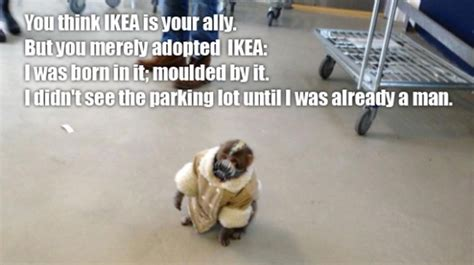 Ikea Monkey Meme - best of ikea monkey meme