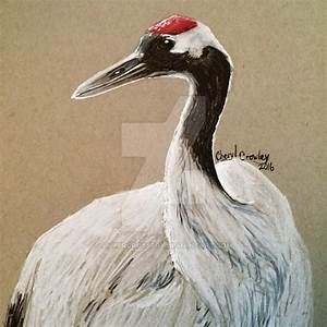 Red-crowned Crane by silvercrossfox on DeviantArt