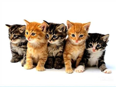 how do cats to be to be fixed fix our ferals omg kittens donateacar
