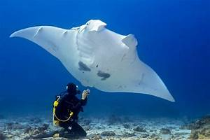 10 Amazing Facts About Manta Rays