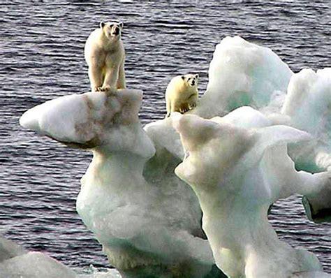 life preservers  polar bears  sinking arctic ice