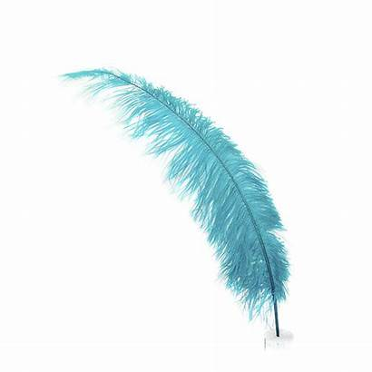 Feather Feathers Meaning Bird Ostrich Need Birds