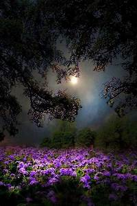 Beautiful night shot of moon and flowers | Nature ...