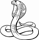 Snake Coloring Pages Printable sketch template