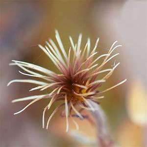 Quoi Planter En Automne : l gumes fruitiers quoi planter en janvier ooreka ~ Melissatoandfro.com Idées de Décoration