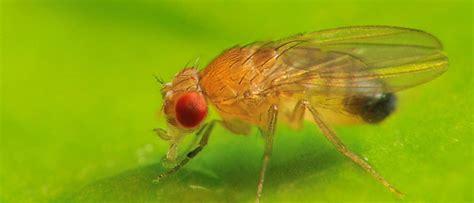 fruit flies max planck gesellschaft