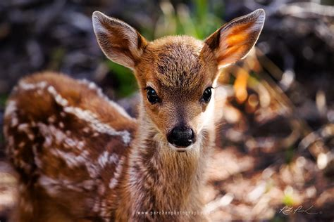 cute baby animals wallpapers  images